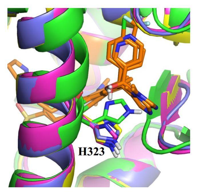 应用高通量虚拟筛选加速先导化合物开发(二)-ROR γ t研究案例