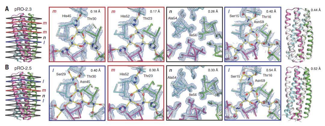 蛋白设计案例--pH驱动构象变化的蛋白质从头设计