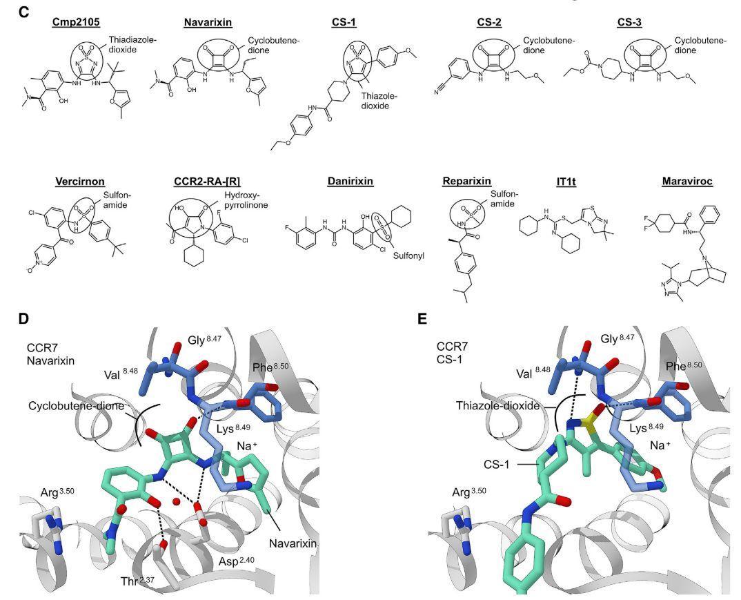 Cell结构生物学+计算模拟发现抗肿瘤靶点趋化因子受体-7别构位点抑制剂
