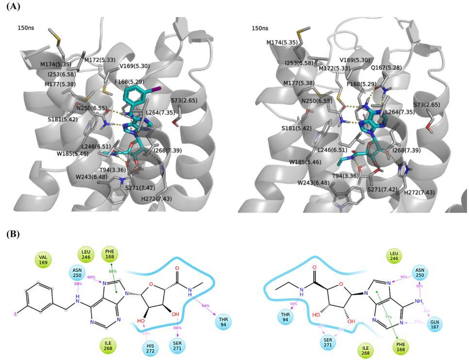 JMC | 黄金搭档!分子动力学结合点突变实验揭示GPCR家族A3腺苷受体与激动剂的结合特征