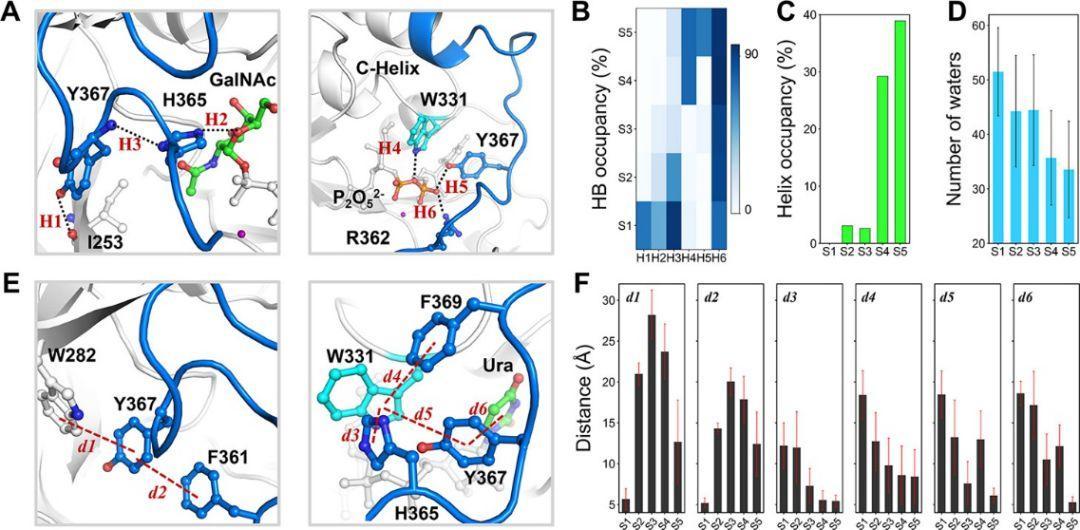 ACS Catalysis | 马尔科夫模型在糖基转移酶模拟中的应用