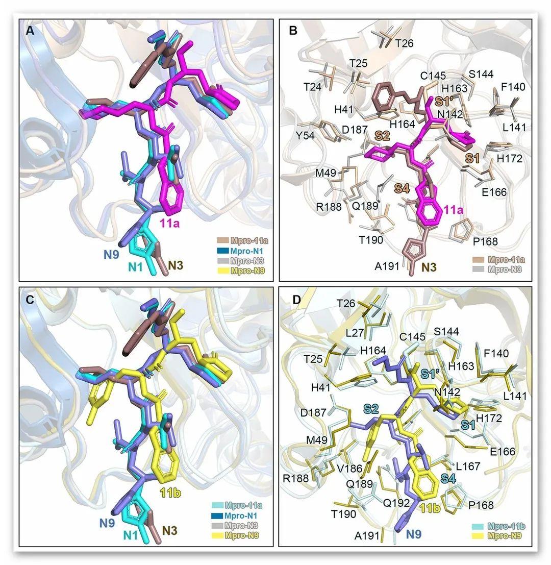 Science丨基于结构的药物设计发现新型抗SARS-CoV-2病毒抑制剂