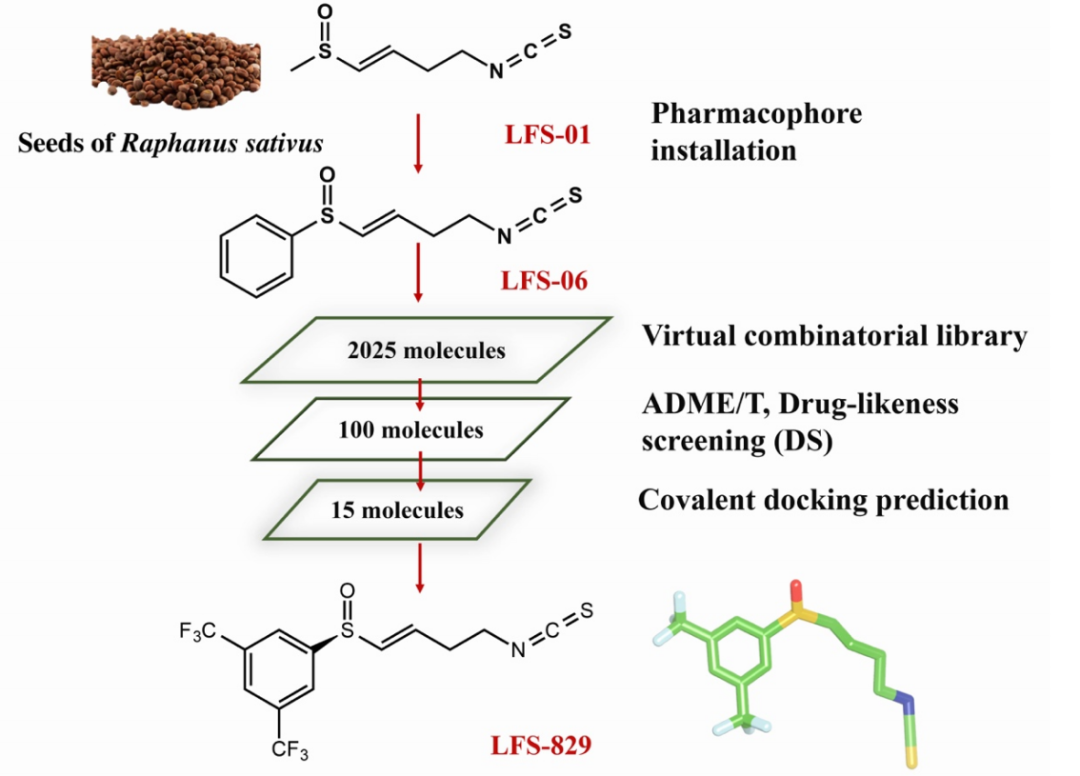 JMC  基于结构的exportin-1小分子共价拮抗剂的发现