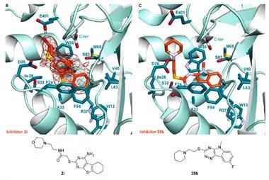 ACS Chem. Biol. | 结核分枝杆菌乙酰转移酶Eis抑制剂的结构导向优化