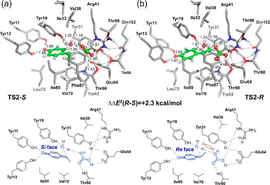 ACS Catalysis   量子化学方法研究酶催化的立体选择性