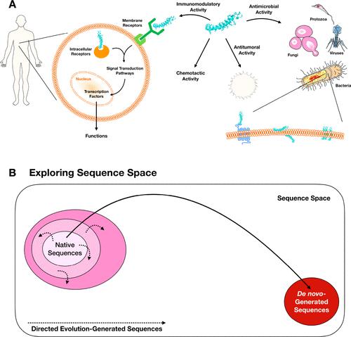 ACS Nano | 基于计算机的抗菌肽发现框架
