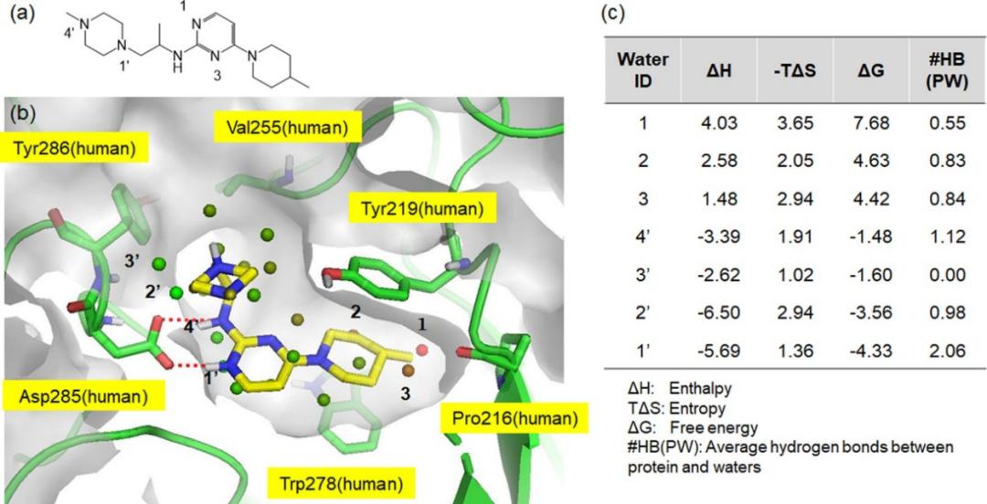 JMC | 基于理性药物设计策略获得新型的O‑GlcNAcase抑制剂