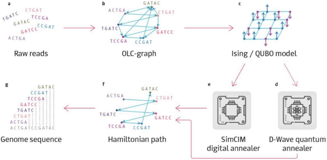 Nature Computational Science   量子计算生物学的实际应用
