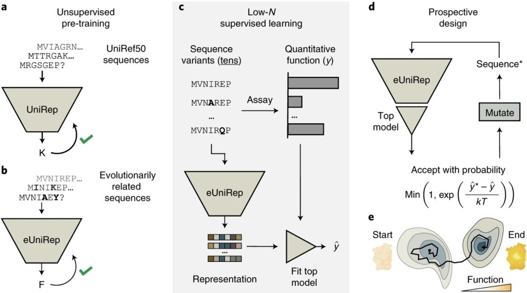 Nature Methods | 利用高效数据优化Low-N蛋白筛选方法