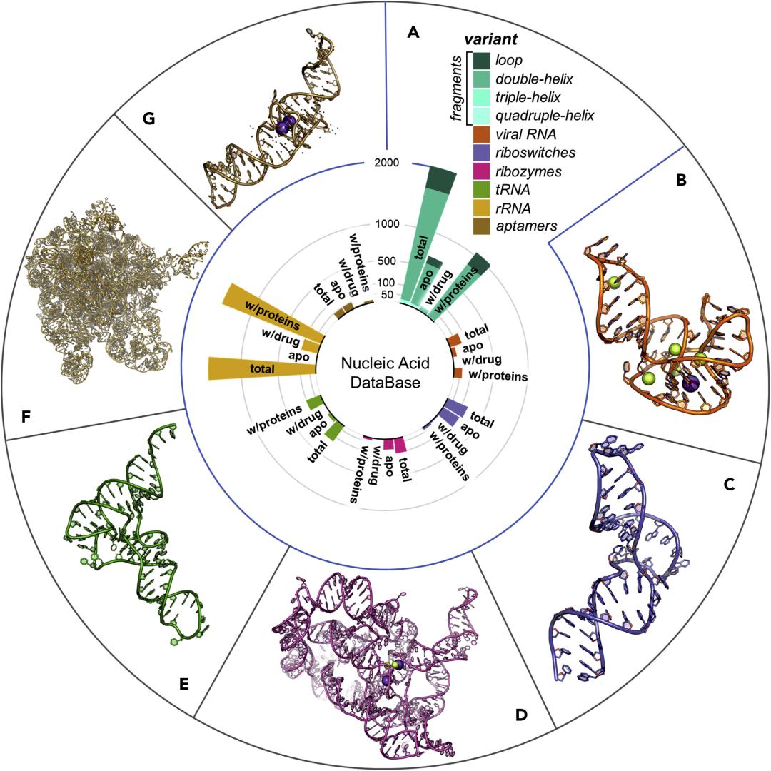 Chem | 综述:靶向RNA小分子的理性设计