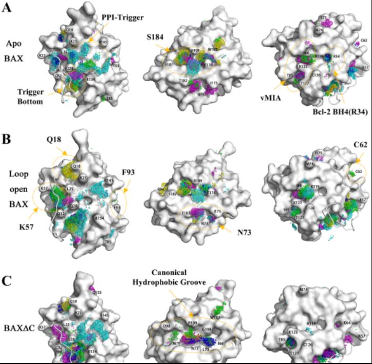 前沿(第八期):JCIM | 分子动力学模拟揭示BAX蛋白的激活机制