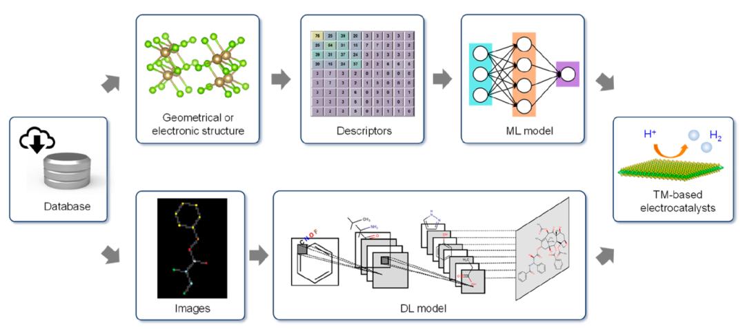 ACS Catal.   机器学习在过渡金属电子催化剂研发中的应用